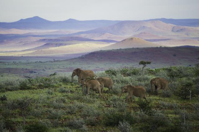 Namibia Safari Tours