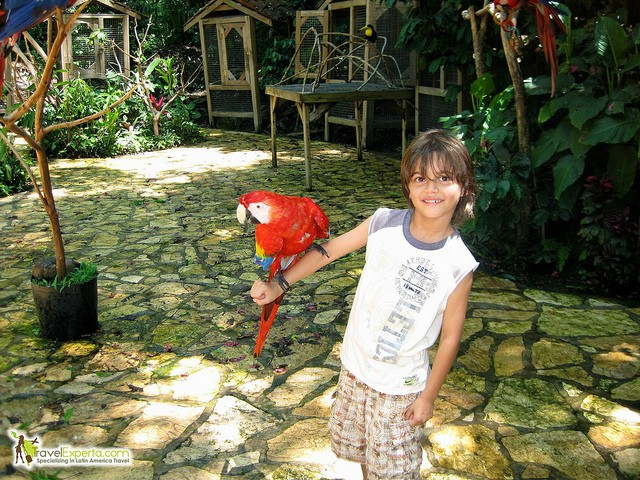 kid interacting with macaw in latin america