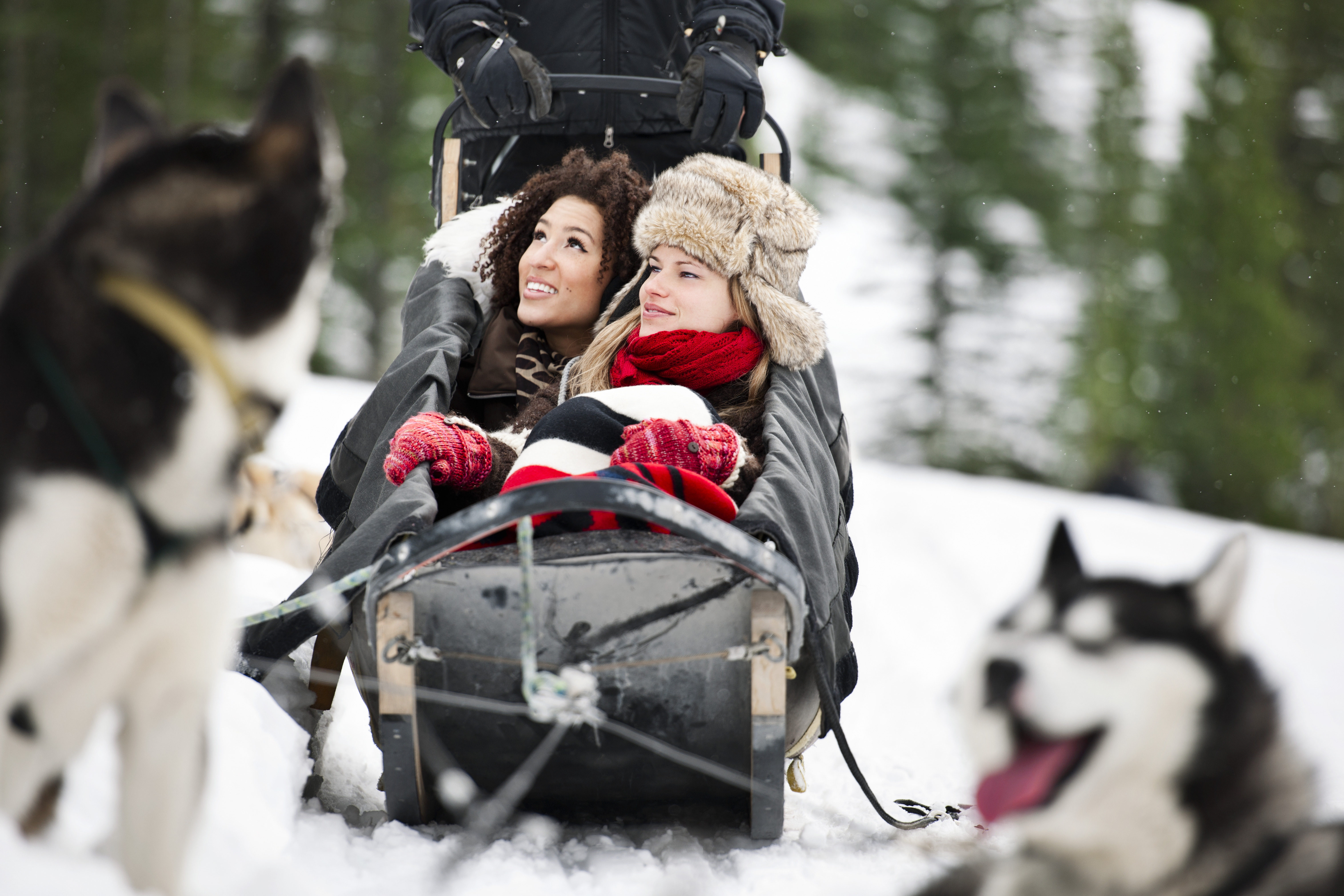 winter adventure travel with dogsledding
